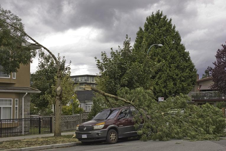 """""""tree fallen on van"""""""